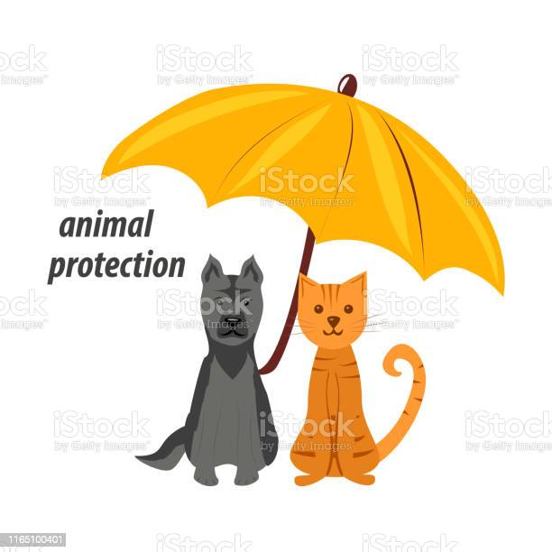 Animal protection a dog and a cat are sitting under an umbrella vector id1165100401?b=1&k=6&m=1165100401&s=612x612&h=eshp2zmf2sxoncpkugn8wc k5bea1vfozlflohbezio=