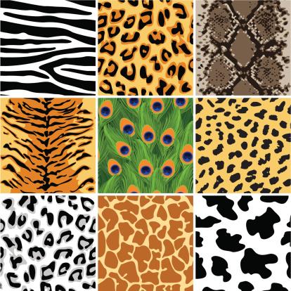 Animal seamless patterns set