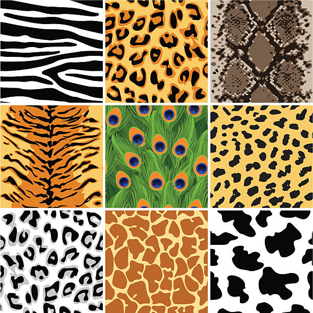 Animal seamless patterns set Vector illustration of animal  animal markings stock illustrations