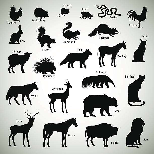 Animal silhouettes Set of animal silhouettes on abstract background raccoon stock illustrations