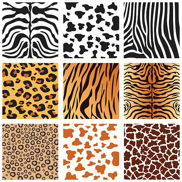 Animal Skins Vector animals pattern collection. animal markings stock illustrations