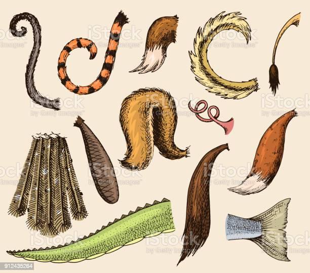 Animal tail vector animalistic tailed breast with furry feathers of vector id912435264?b=1&k=6&m=912435264&s=612x612&h= 5k8w7ugubcnaeajw0mvao32zxfttd7rdyaz20lb8ti=