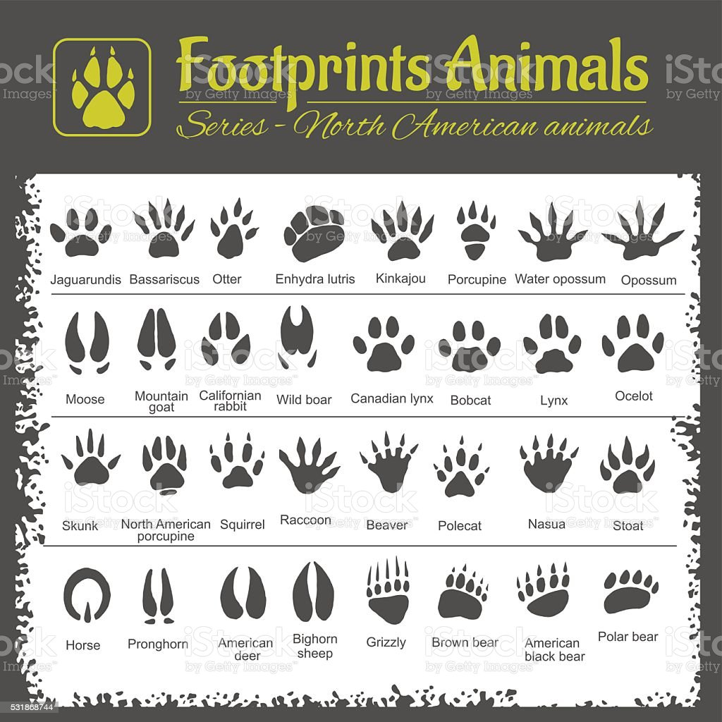 Animal Tracks - North American animals vector art illustration
