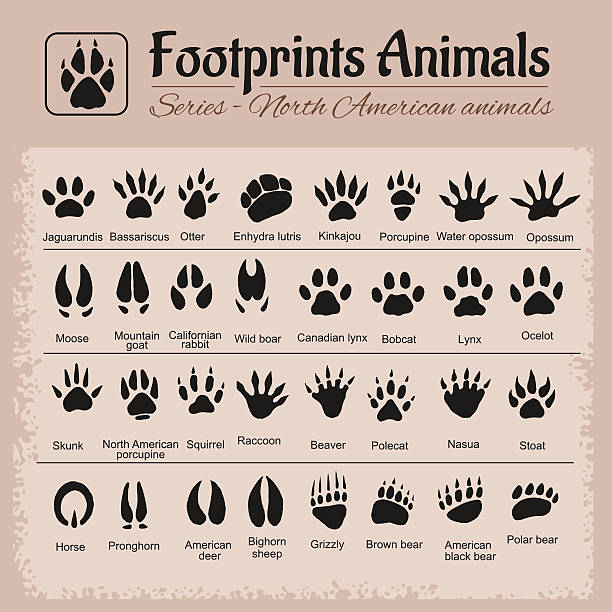 animal tracks - north american animals - otter stock illustrations, clip art, cartoons, & icons