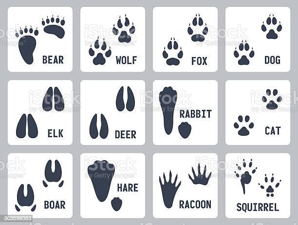 Animal tracks vector icons set vector id503599383?b=1&k=6&m=503599383&s=612x612&h=qyiqgfd711 gwdsqjm4bvb0j2nal7fbkehd ojp52cu=