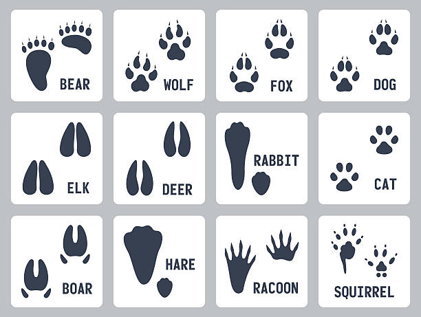 Animal tracks vector icons set Animal tracks vector icons set elk stock illustrations