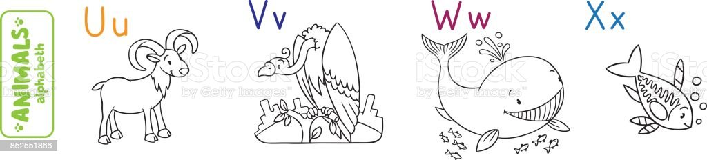 animals alphabet or abc coloring book royalty free stock vector art