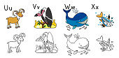 Coloring book or coloring picture of funny urial, vulture, whale and x-ray fish. Animals zoo alphabet or ABC.
