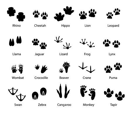 Animals and birds feet tracks, vector trails set