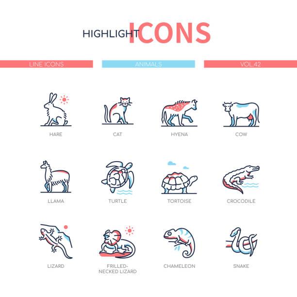 Animals collection - line design style icons set Animals collection - line design style icons set. Images of pets, farm and amphibians. Hare, cat, hyena, cow, llama, turtle, tortoise, crocodile, lizard, frilled-necked lizard, chameleon, snake amphibians stock illustrations