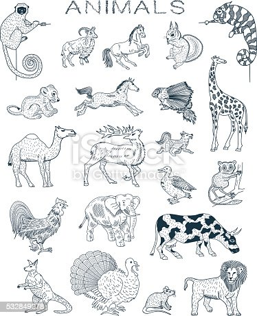 Vector animals doodles. Illustration Animals and Pets. All objects in groups and easy to edit.