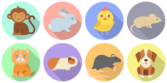 animals Flat Design