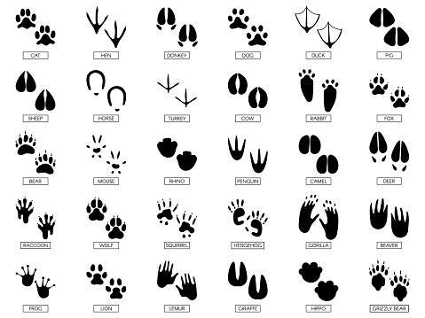 Animals footprints. Animal feet silhouette, frog footprint and pets foots silhouettes prints vector illustration set