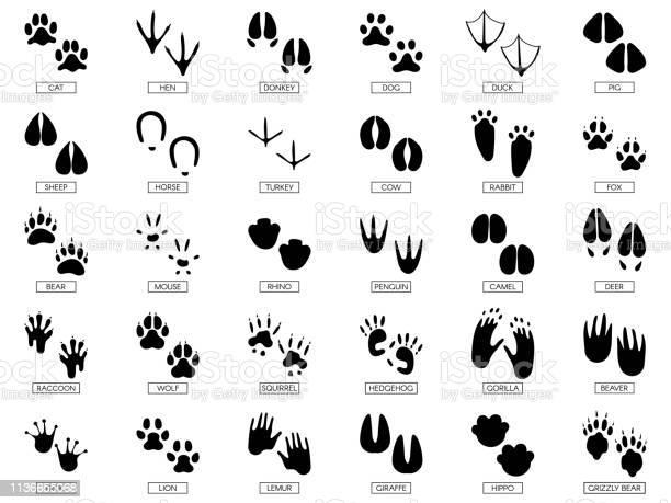 Animals footprints animal feet silhouette frog footprint and pets vector id1136655068?b=1&k=6&m=1136655068&s=612x612&h=9f7h3ivcnt130ptxn8lv3hg58ywwrqc4u 8yaiq6das=
