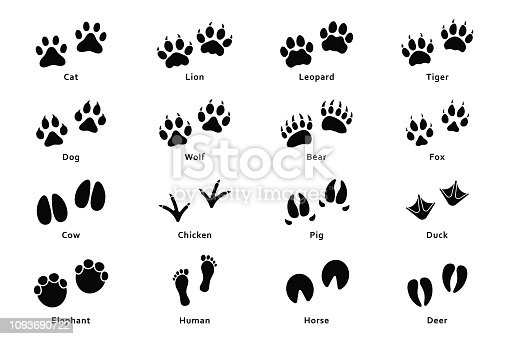 Animals footprints, paw prints. Set of different animals and birds footprints and traces. Cat, lion, tiger, bear, dog, cow, pig, chicken, elephant, horse etc. Vector
