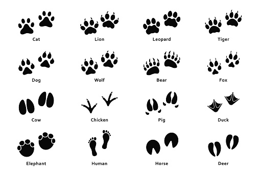 Animals footprints, paw prints. Set of different animals and birds footprints and traces. Cat, lion, tiger, bear, dog, cow, pig, chicken, elephant, horse etc