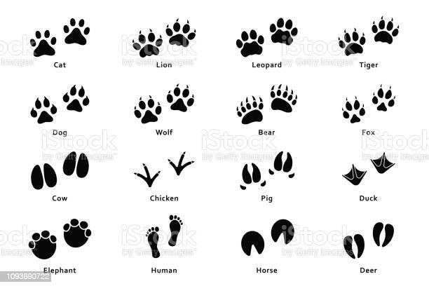 Animals footprints paw prints set of different animals and birds and vector id1093690722?b=1&k=6&m=1093690722&s=612x612&h=dkc72iuydvixdymbsfekv6yltqppygcxsh5livexzls=