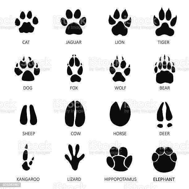 Animals footprints vector id525383987?b=1&k=6&m=525383987&s=612x612&h=95ykdysta1he9jh4yljqj7xpub3tjtnhi1qeiaai2iw=