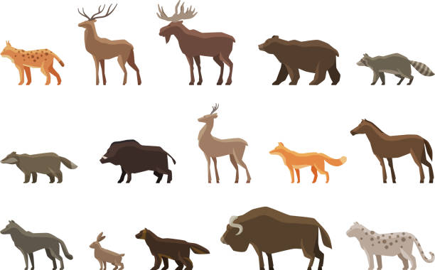 Animals icon set. Vector symbols such as lynx, deer, elk Animals icon set. Vector symbols lynx, deer, elk, bear, raccoon, badger, wild boar, roe deer, fox horse wolf hare musk ox snow leopard wolverine stuffed stock illustrations