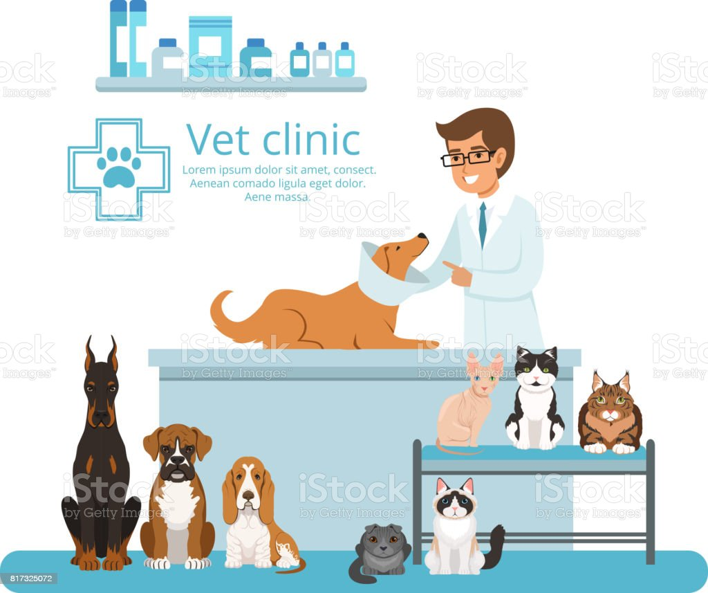 Animales en el gabinete del hospital veterinario. Ilustración de vector - ilustración de arte vectorial