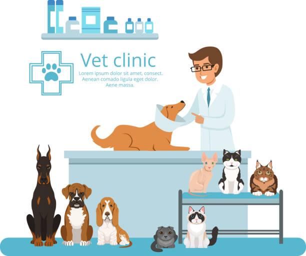 animals in cabinet of vet hospital. vector illustration - veterinarian stock illustrations, clip art, cartoons, & icons