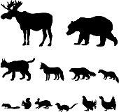 Animals living in taiga. Icons set.
