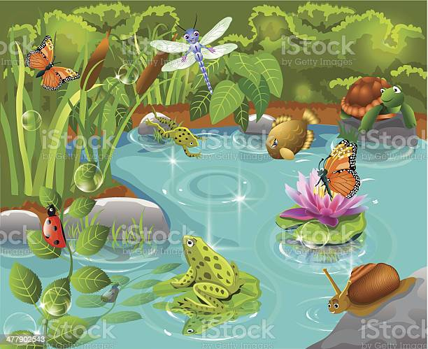 Animals living in the pond vector id477902543?b=1&k=6&m=477902543&s=612x612&h=8o2qokgwxqfwetwb ne4yncpgnvkimrbhvmoq7shma0=