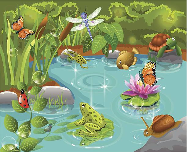 tiere leben im teich - seerosenteich stock-grafiken, -clipart, -cartoons und -symbole