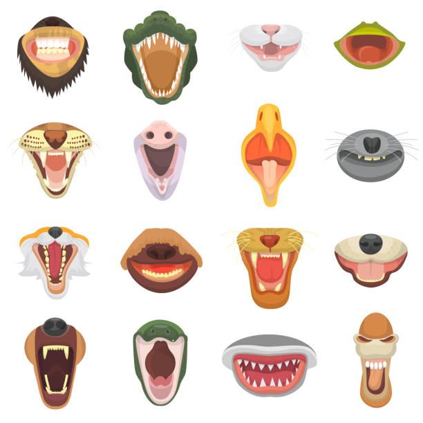 tiere mund vektor gabelflüge mit zähne oder zähne der wilden tiere wütend löwe oder katze und bär mit aggressiven hai abbildung animalische tier isoliert auf weißem hintergrund lachen - maul stock-grafiken, -clipart, -cartoons und -symbole