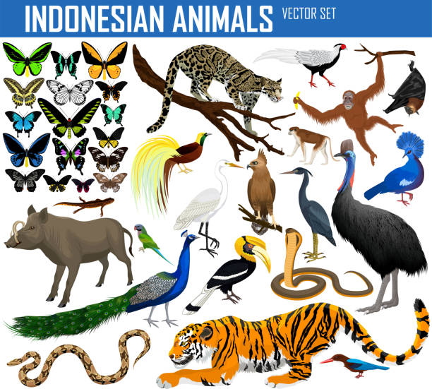 tiere aus indonesien und indochina - vektor-set - megabat stock-grafiken, -clipart, -cartoons und -symbole