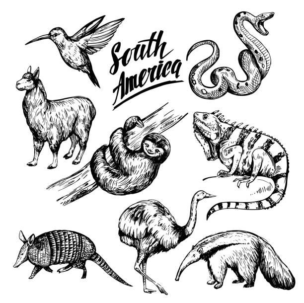 tiere in südamerika. handgezeichnete skizze abbildung in vektor umgewandelt. isoliert - ameisenbär stock-grafiken, -clipart, -cartoons und -symbole