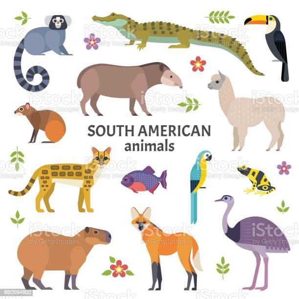 Animals of south america vector id692594602?b=1&k=6&m=692594602&s=612x612&h=rzzwf9vjbgpyxxxswduz45je l uwqngasqrfjt1fqi=
