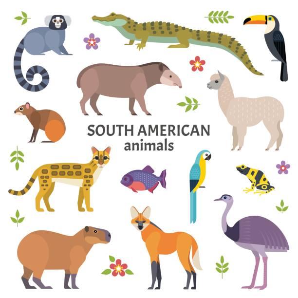 illustrazioni stock, clip art, cartoni animati e icone di tendenza di animals of south america. - ocelot