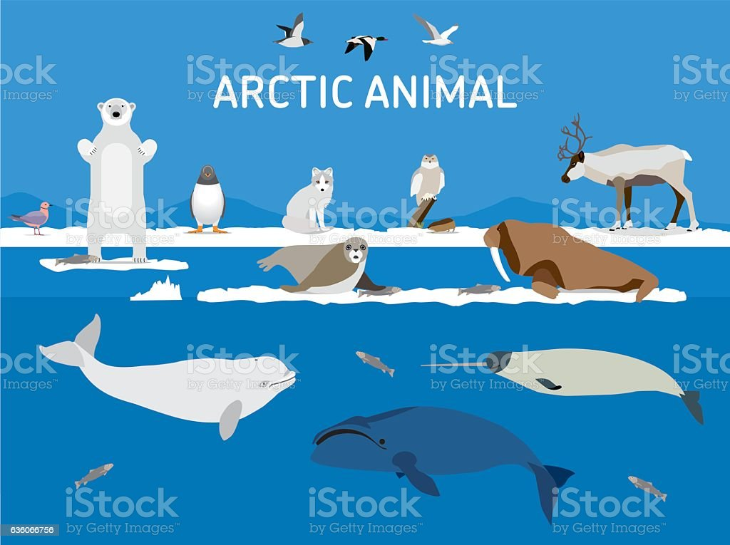Animals of the Arctic. Flat style illustration vector art illustration