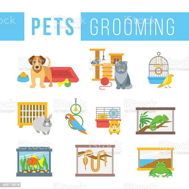 Animals pets grooming flat colorful vector illustrations vector id546776818?b=1&k=6&m=546776818&s=612x612&h=tirxlk3lnamje8nzw9b0yuspwc igdcz8r6uncvjtr4=