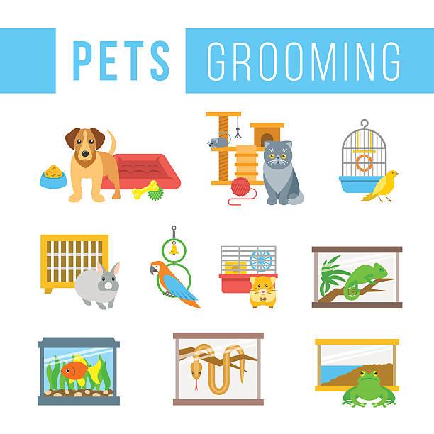 animals pets grooming flat colorful vector illustrations - hamsterhaus stock-grafiken, -clipart, -cartoons und -symbole