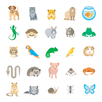Animals pets vector flat colorful icons set isolated on white