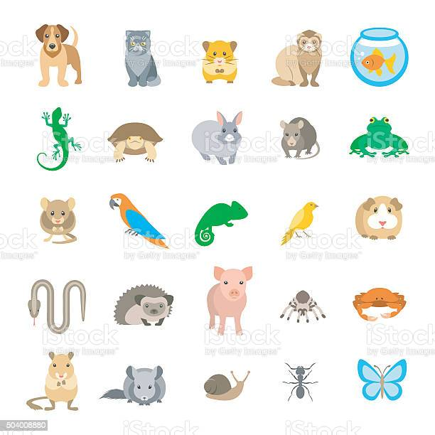 Animals pets vector flat colorful icons set isolated on white vector id504008880?b=1&k=6&m=504008880&s=612x612&h=w4nbiep8cedp4j2y0eenndh9qm 9u0soohwa8dy1cuk=