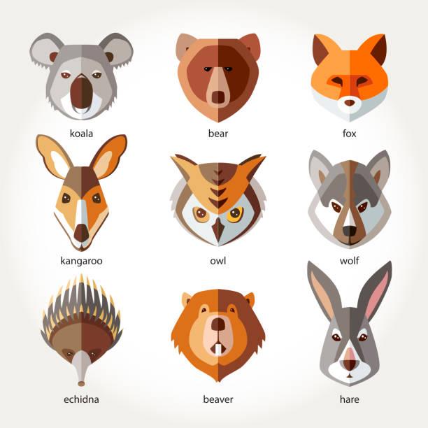 Animals Set Icon Head Muzzles Koala Bear Fox Kangaroo Owl Wolf Echidna Beaver Rabbit Hare Vector