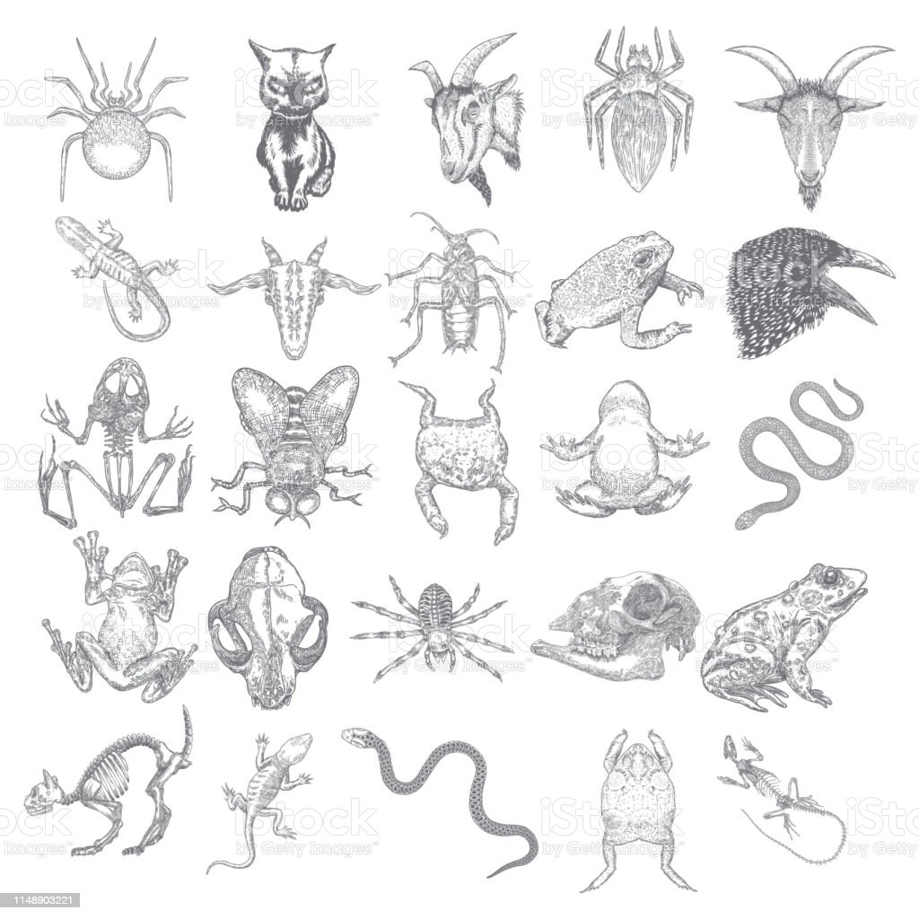 Animals set. Reptile frog, toad, lizard skeleton and snake, spider,...