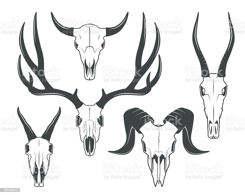 Animals skulls vector art illustration