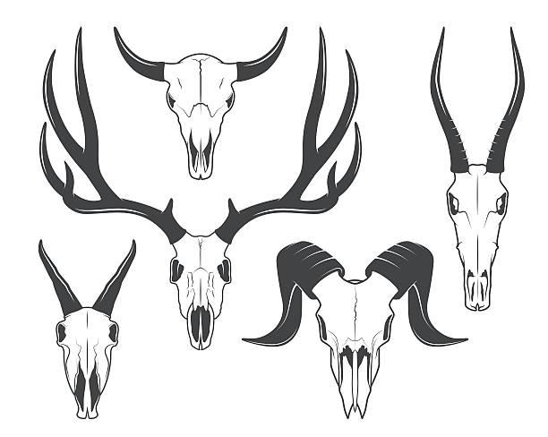 animals skulls - animal skull stock illustrations