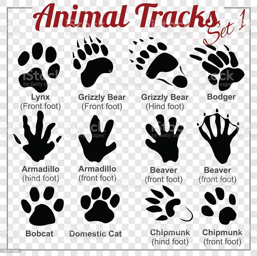 Animals Tracks - vector set, vector art illustration