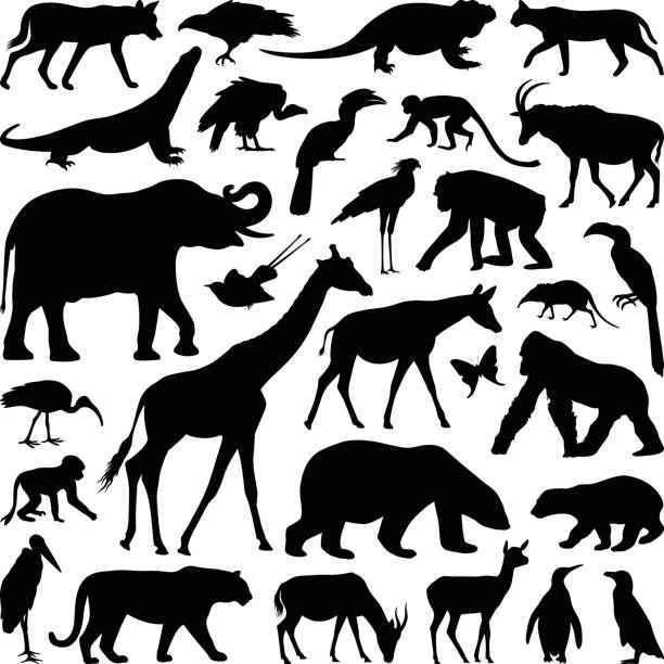 Animals Zoo animal collection - vector silhouette illustration zoo stock illustrations