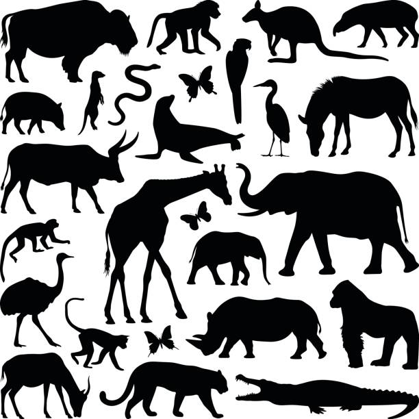 動物 - 動物園点のイラスト素材/クリップアート素材/マンガ素材/アイコン素材