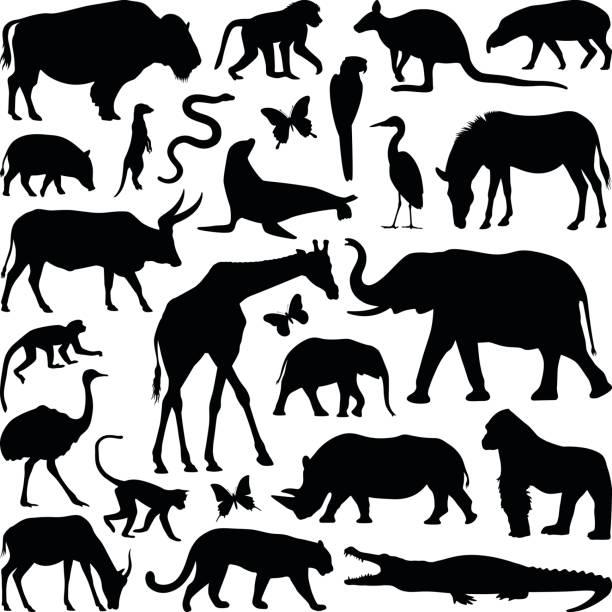 animals - crocodile stock illustrations