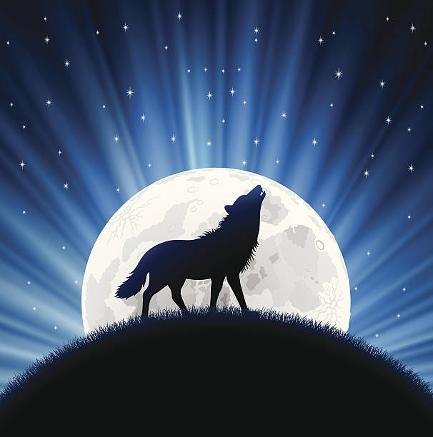 Animated wolf howling with the moon behind him and stars High Resolution JPG,CS5 AI and Illustrator EPS 8 included. Each element is named,grouped and layered separately. Very easy to edit. silhouette of a howling coyote stock illustrations