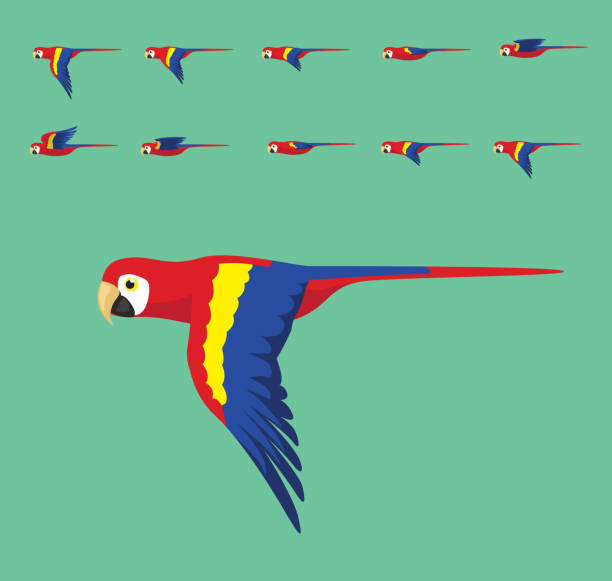 ilustrações de stock, clip art, desenhos animados e ícones de animation macaw flying cute cartoon vector illustration - arara