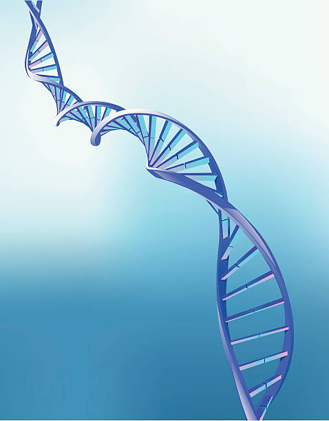 Animation of double helix strand of DNA DNA double helix - detailed vector illustration. Background is a gradient mesh. helix model stock illustrations