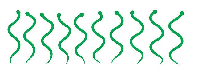 Animation Snake Moves Anatomy Cartoon Vector Illustration